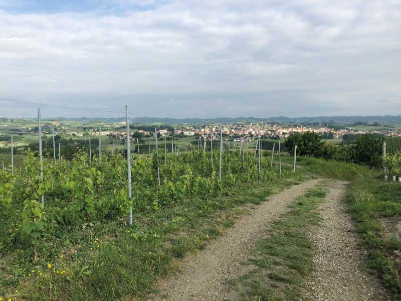 Vigne-Val-Serra-San-Damiano
