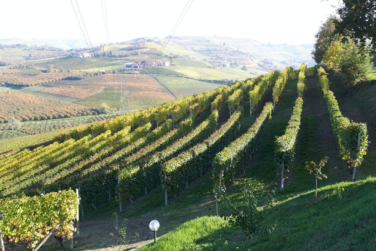 Saverio Vacca Piemonte